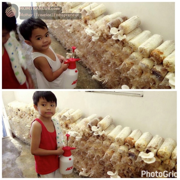 mushroom-harvest