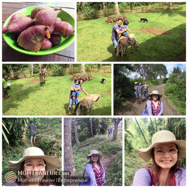 A visit to Mahal's farm near Claveria