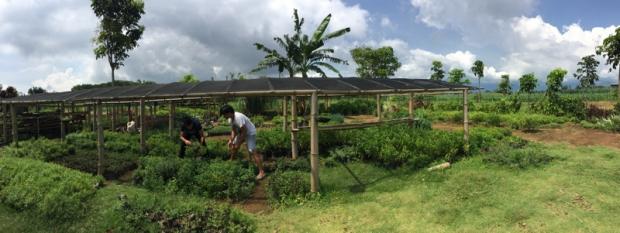 Jaco's Herb Garden