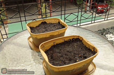 mini vegetable garden at home