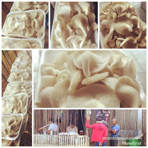 Fresh White Oyster Mushrooms For Sale