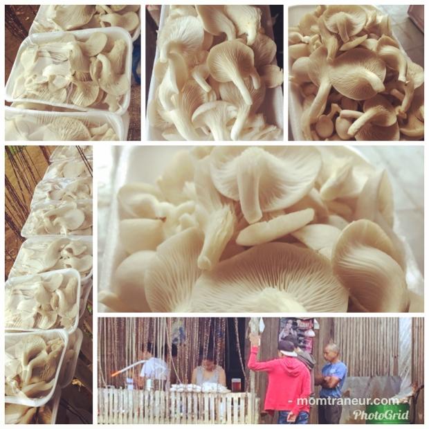 Fresh White Oyster Mushrooms For Sale