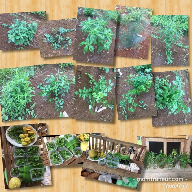 Herb Cuttings for Rooting