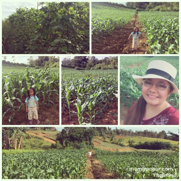 Corn and Bean Farm