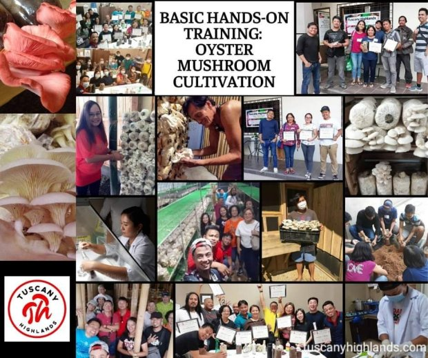 Mushroom Cultivation Training