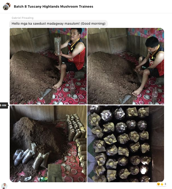 Tuscany Highlands Mushroom Trainee